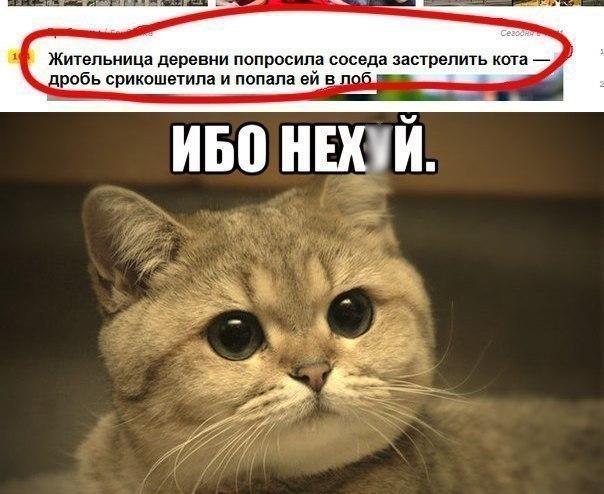 Ибо нех*й  обижать котиков